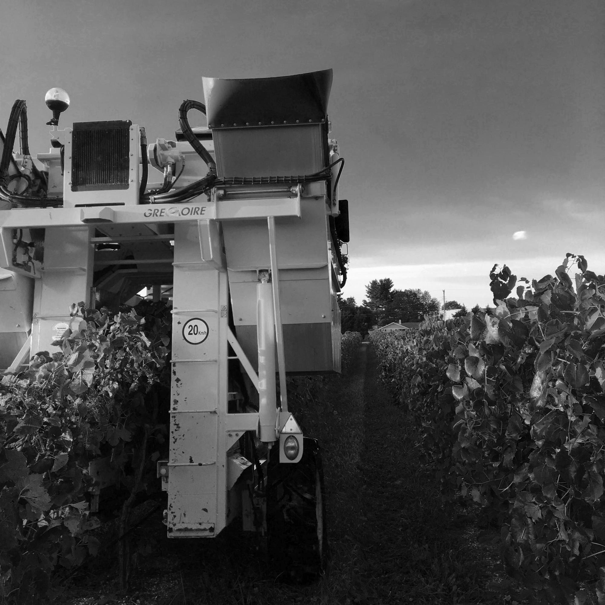 Vines2BW